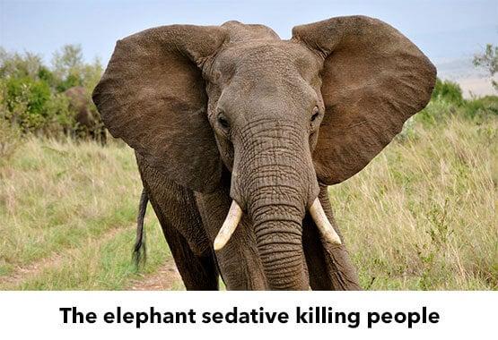 Carfentanil Abuse in Elephant - Miami FL